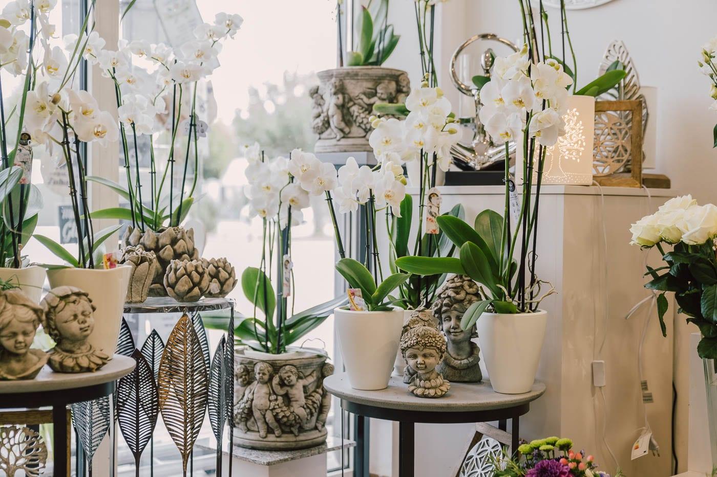 Blumen-Gaby-Strohmeier-Graz-Geschenkartikel-5