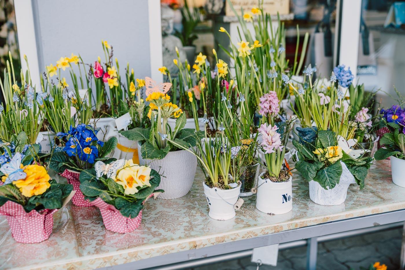 Blumen-Gaby-Strohmeier-saisonales-feb20-23