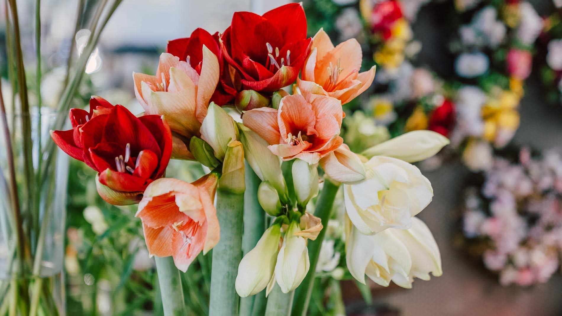 blumen-gaby-strohmeier-blumenhandlung-florist-graz-strassgang-2
